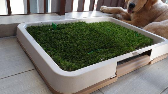 Solid Durable Hardly used Pee Tray with owner fitted quality artificial grass