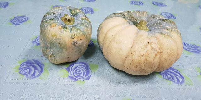 🚚 栗子南瓜1台斤台東有機無毒數量有限
