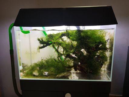 2ft custom make  fish tank ONLY