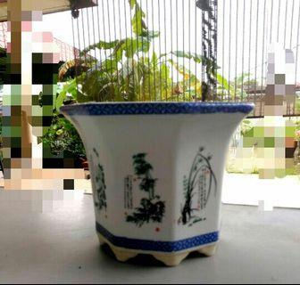 Porcelain Bonsai Pot