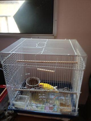 🚚 Birdcage
