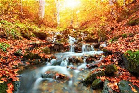 🚚 Rapid Mountain River in an Autumn Woods Canvas Art Print