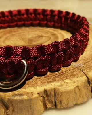 Cobra Paracord Pet Collar with Silver Buckle