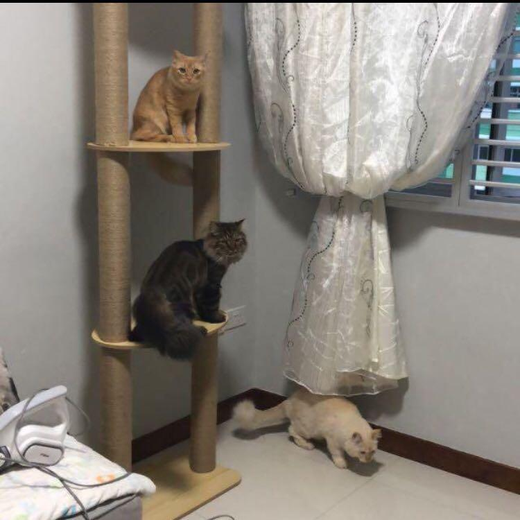 New No Drill Cat Condo Double Ceiling Cat Tree House