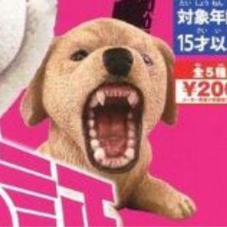 野性之証  3rd strike - 狗