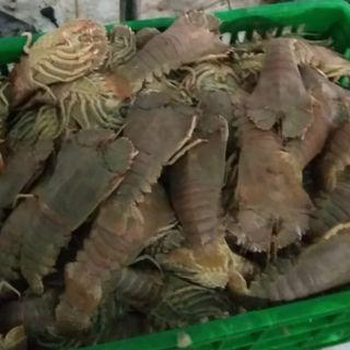 FAST SALE > Frozen Crayfish - Slipper Lobster (hay por) > whole piece 200 gram and above