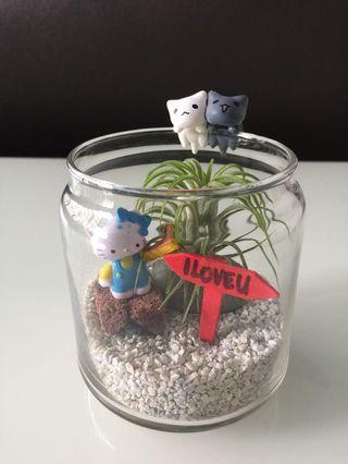 🚚 I Love U Kitty air plant terrarium