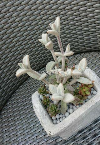 母親節-福兔愛回家-多肉植物拼盤 Succulents for Mama