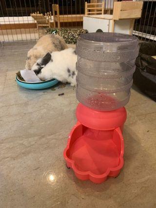 🚚 Pet Water Dispenser