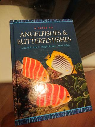 A Guide to Angelfishes & Butterflyfishes