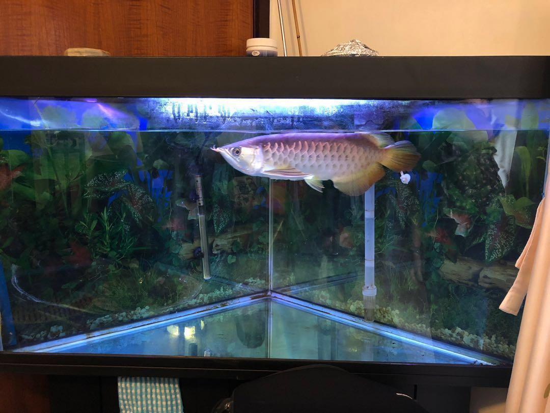 魚缸(唔包魚)