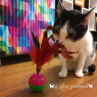 貓咪不倒翁羽毛球(球重)