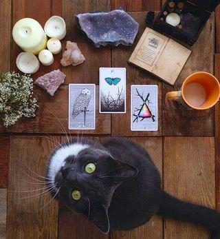 TAROT READINGS FOR LOVE, MONEY AND MORE