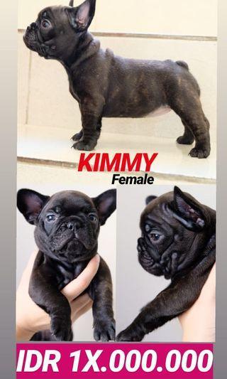 Puppies Franchie Bulldog