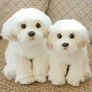 [Pre-Order] Real Life Simulation Cute Small White Bichon Frise Stuffed Plush Toy
