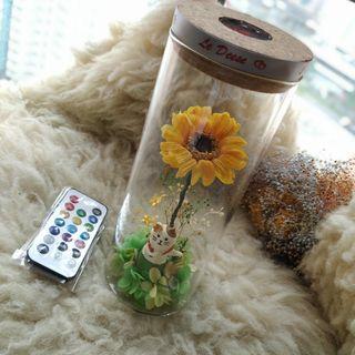 太陽菊保鮮花