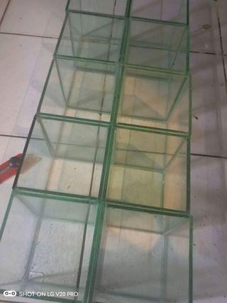 Aquarium cupang soliter 10x10x15