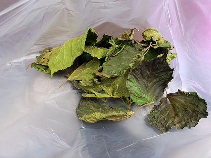 32 Dried Mulberry leaves