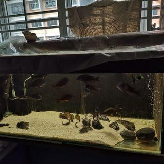 🚚 4ft Fish Tank with Rack