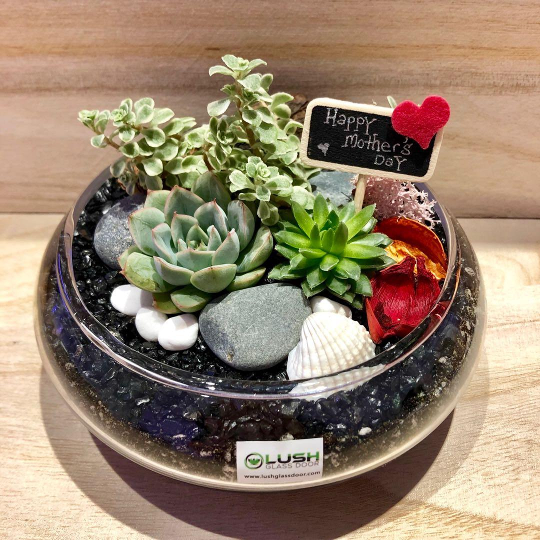 Perfect Gift For Mother S Day Valentine Anniversary Christmas Xmas Birthday Congrats Farewell House Warming Real Plant Succulents Cactus Terrarium Gardening Plants On Carousell