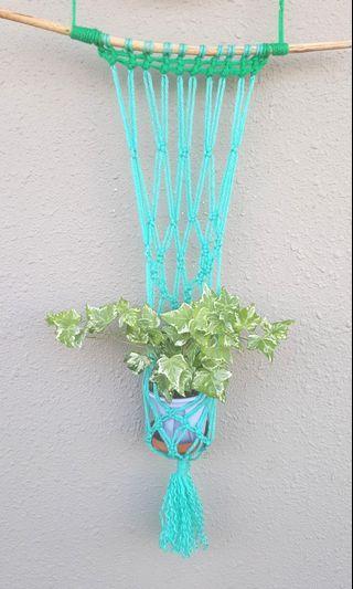Macrame+Air purifying Variegated Ivy