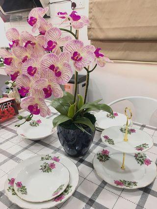 2Stalks Premium Orchid/Orkid Latex.