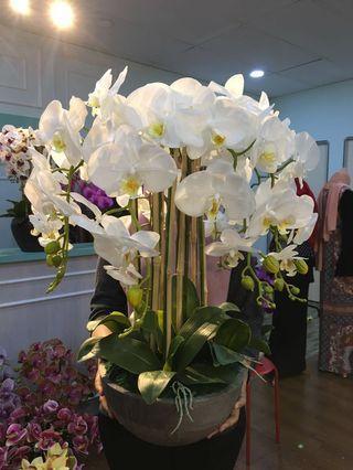 8Stalks Latex Orchid/Orkid