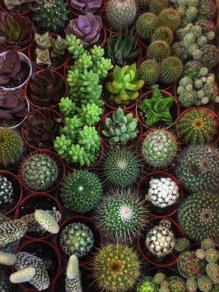 Random Cactus