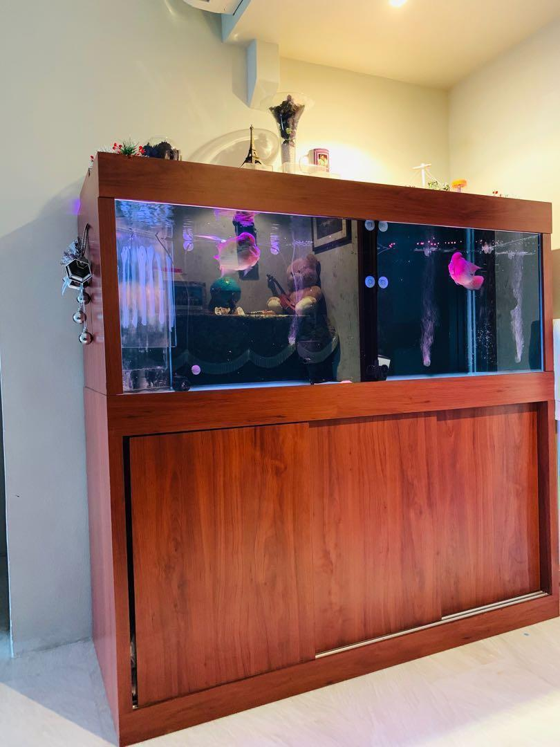 Beautiful Fish Tank with Top Notch Accessories
