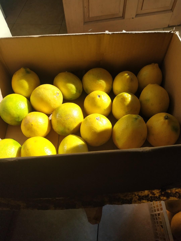 Lemon tipe California ukuran besar banyak air