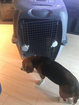Dogit Cargo Dog Carrier