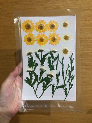 🚚 Dried pressed sunflowers