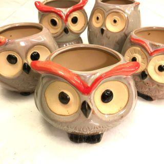 🦉 Owl Pots 🦉- Great for Cactus and Succulents