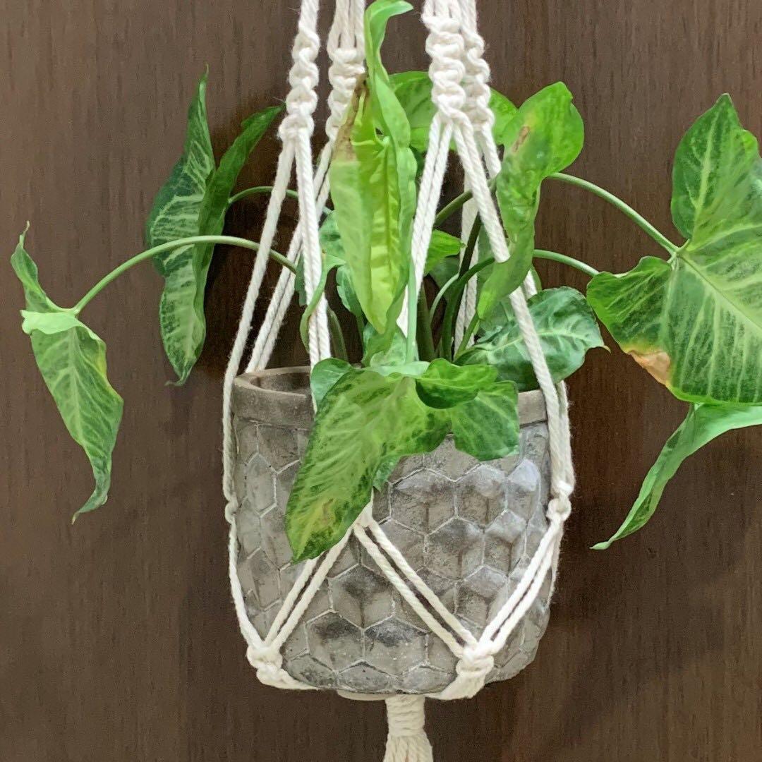 Handmade Macrame Plant Holder (008)