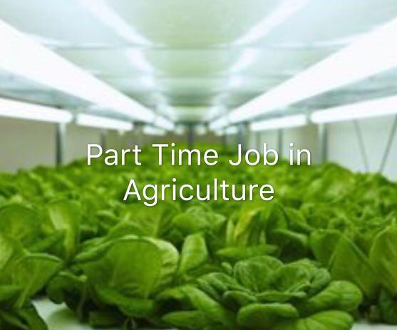 Part time job (agriculture)
