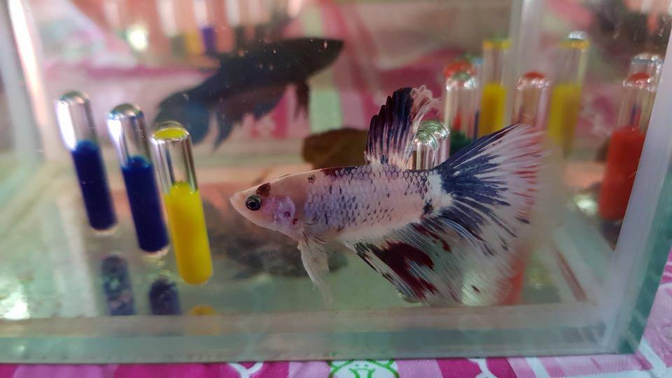 Aquarium colourful liquid capsule