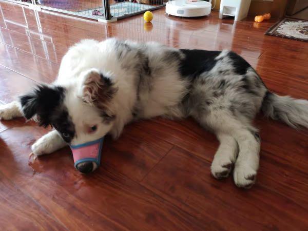 Pet muzzle dog prevent biting barking