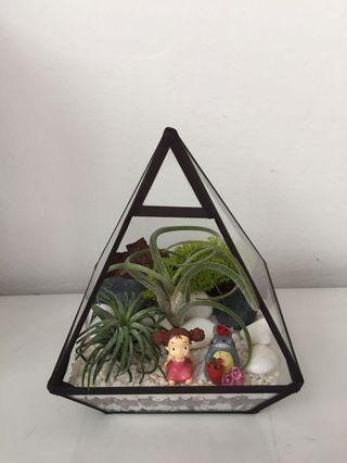 Totoro air plants terrarium