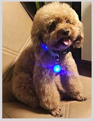 Pet LED Leash LED 宠物项链