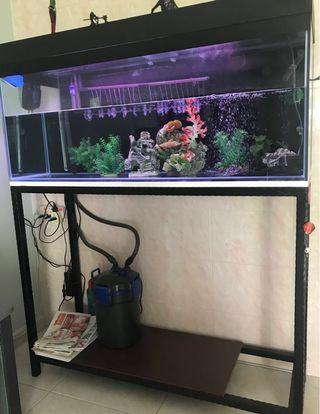 4ft Fish Tank with led lights. And All item.