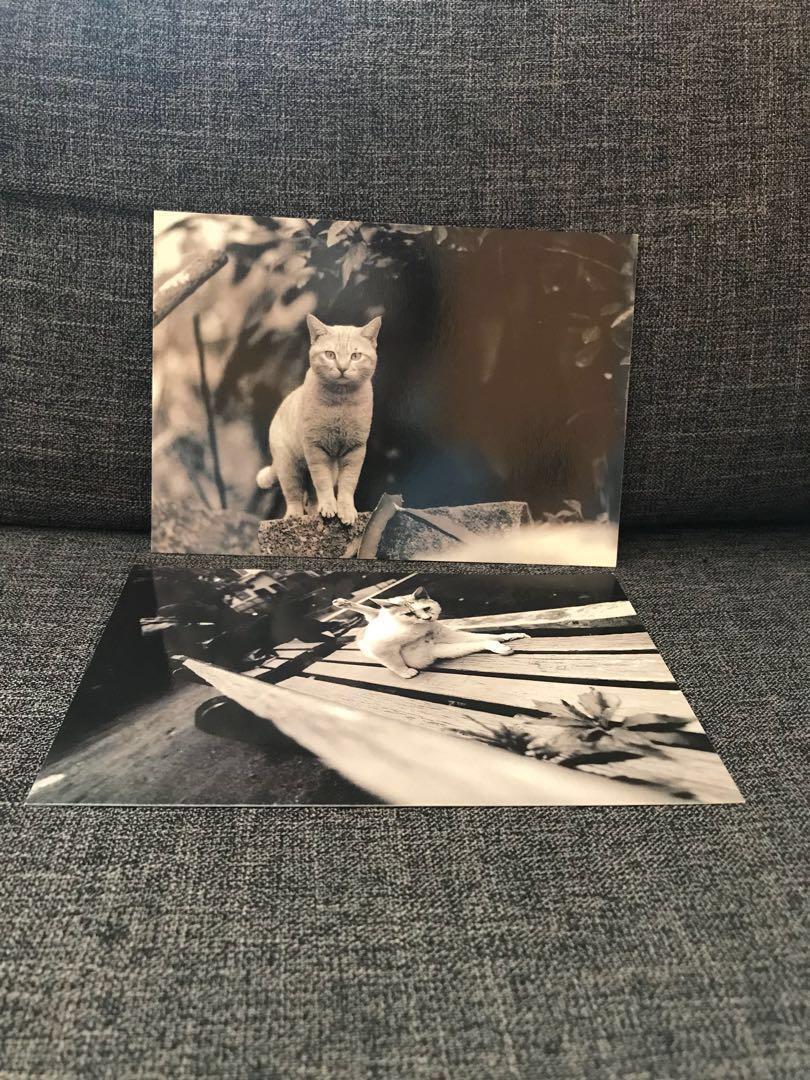 12張貓貓明信片 / 12 Cat Postcards