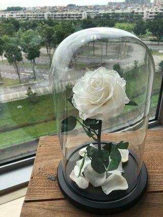 🚚 Cheap preserved rose in glass jar