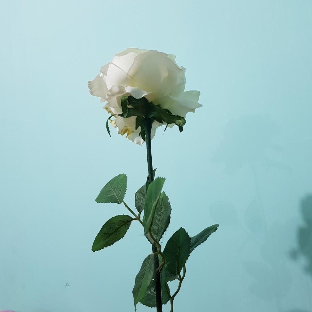 Bapau Bunga Mawar Plastik Tanaman Hias Perkebunan Di Carousell