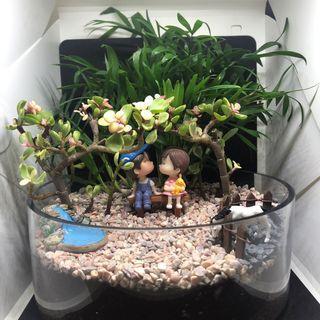 🚚 Jade Couple Terrarium (T69)