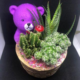 🚚 Cactus Terrarium (T71)