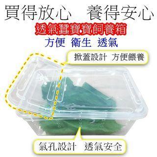 💕現貨💕 蠶寶寶 養蠶盒 飼養盒 透氣 安全 方便 衛生 氣孔設計 飼養箱 掀蓋設計 方便餵養 養蠶箱