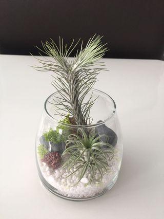 Sand air plants terrarium