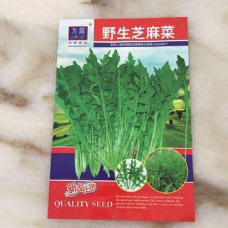 Vegetables seeds - arugula rocket leaves 野生芝麻菜