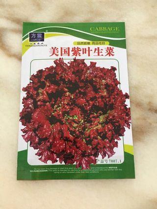 Vegetables seeds - purple coral lettuce 美国紫叶生菜