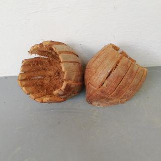 Coconut husk - For orchid plant